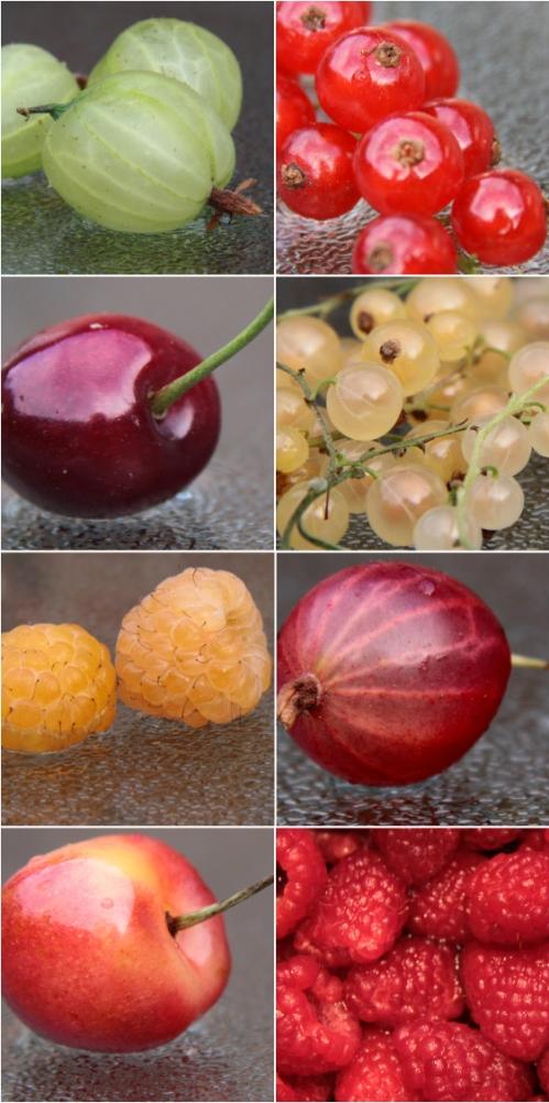 berrybounty